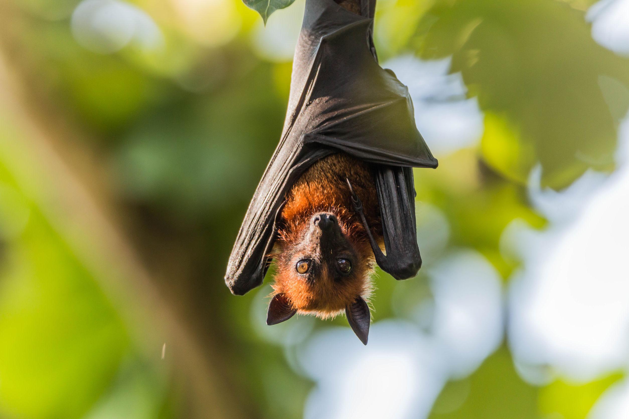 bat removal in alexandria va